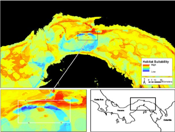 Read more about the article Doctoral Thesis on Jaguar Preservation in Panama